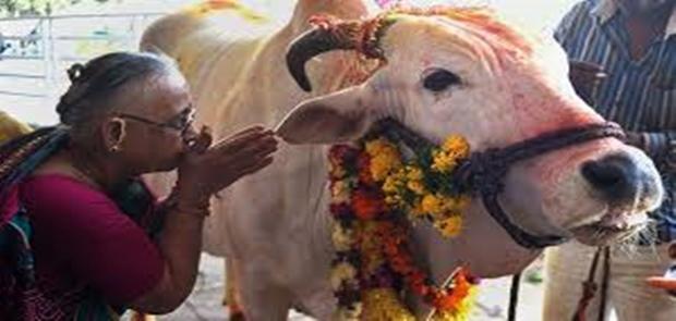 Hindu Garis Keras Bunuh Pria Muslim Gara-Gara Sapi