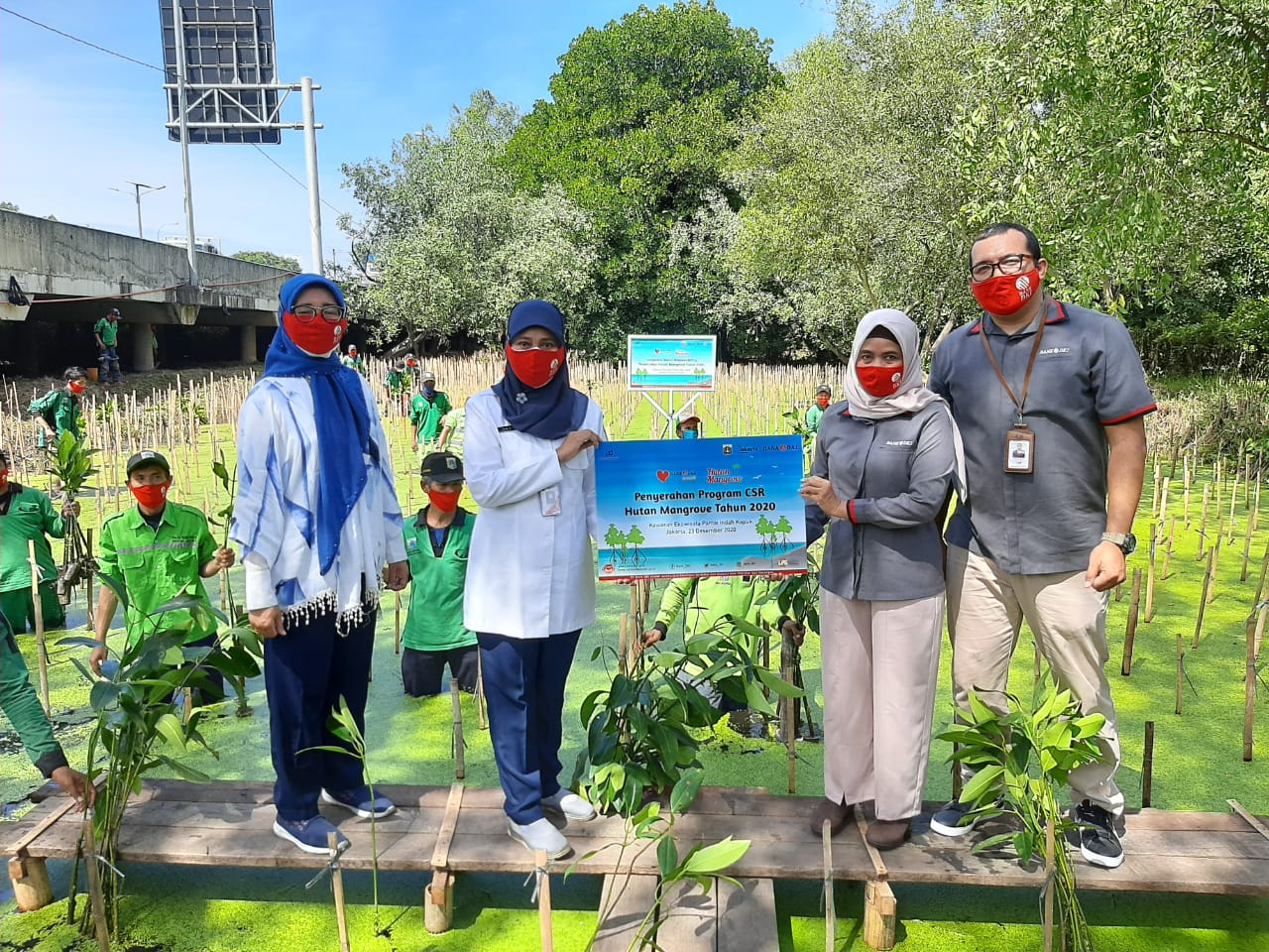 Bank DKI Kembali Tanam 5000 Bibit Mangrove di Jakarta Utara