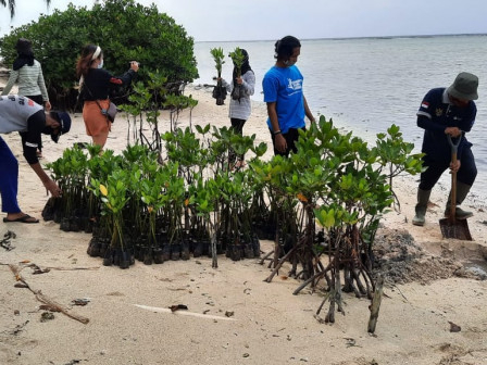 1.500 Mangrove Ditanam di Kawasan Konservasi Pulau Tidung Kecil