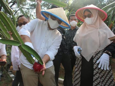 Tinjau Panen Agro Eduwisata dan Pengolahan Ikan, Wagub Ariza Pastikan Stabilitas Pangan Jelang Ramadan
