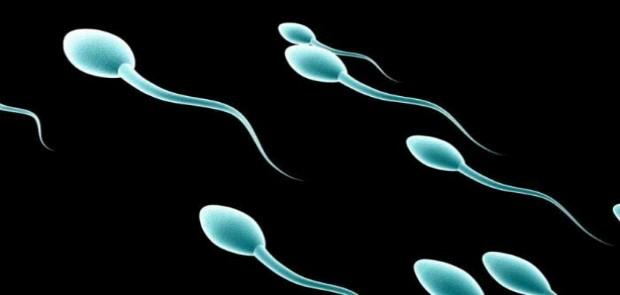 Keren ! Perangkat Ponsel Pintar Bisa Menguji Kualitas Sperma